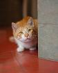 Рыжий котик в дар!
