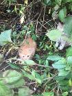 Котята ищут дом, Светлогорск