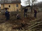 Услуги по вырезке деревьев