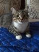 Брутальный красавец кот