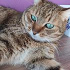 Зеленоглазый красавец кот