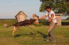 Дрессировка собак в Могилёве