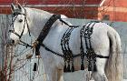 Упряжь для лошадей - хомуты всех размеров, уздечки