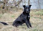 Собака Лео. Привит, кастрирован, Брест в Беларуси