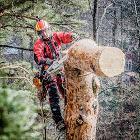 Поможем быстро спилить дерево без ущерба, Минская область в Беларуси