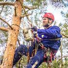 Нужно безопасно спилить дерево со скидкой? Переход, Минск в Беларуси