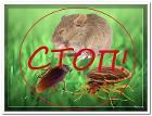 Травля крыс и мышей в Могилеве и области