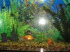 аквариум 70л с пластиковой крышкой и светом