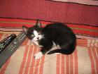 котята приучены