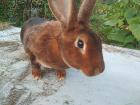 Кролики, Клецк в Беларуси