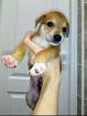 Маленький щенок ищет заботливые ручки., Гродно в Беларуси