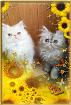 Персидские котята. Персы., Минская область в Беларуси