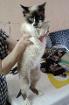 Подарю котика Уилли, Новополоцк в Беларуси