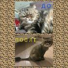 Стрижка собак и котов Лошица.