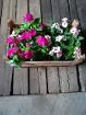 Цветы уличные