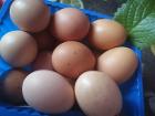 Яйца домашние крупные
